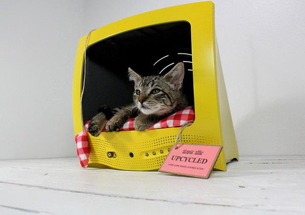 Culcus pentru pisici #2