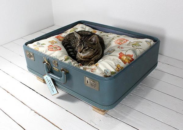 Culcus pentru pisici #3