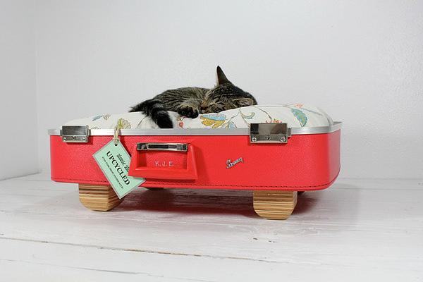 Culcus pentru pisici #4