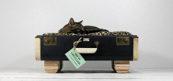 Culcus pentru pisici #5