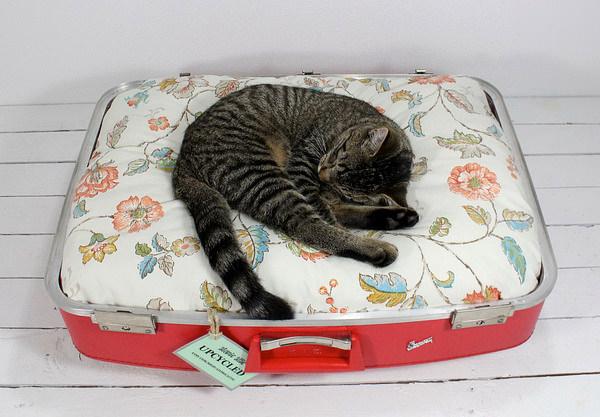 Culcus pentru pisici #6