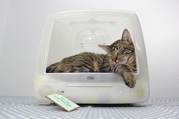 Culcus pentru pisici #7