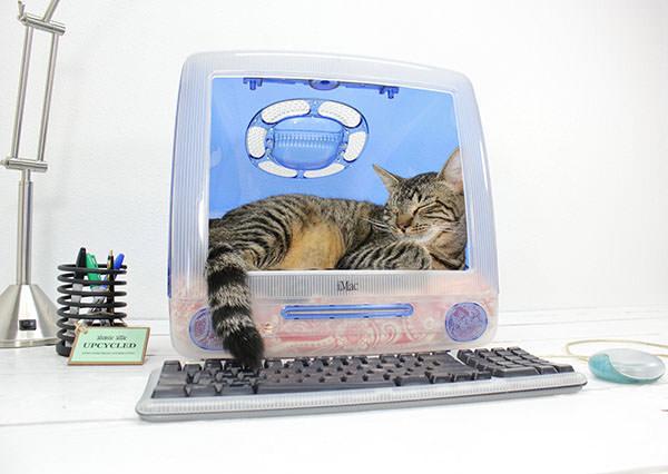 Culcus pentru pisici #8