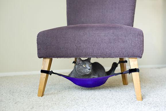 Pat pentru pisica