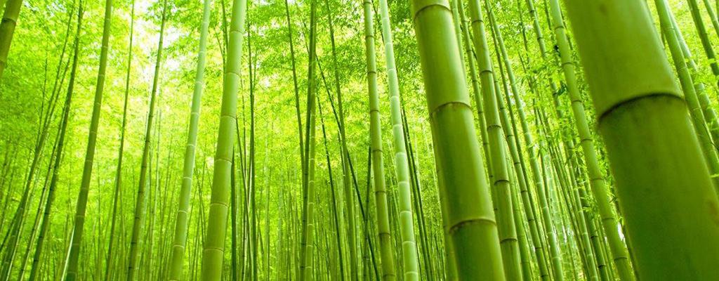 Alege lenjerie intimă din bambus!